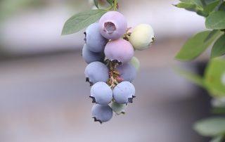 Isotonische OPC-Antioxidantien