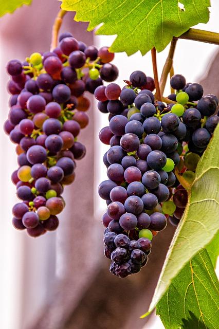 Nehmen Sie Traubenkernextrakt in Ihre tägliche Ernährung auf