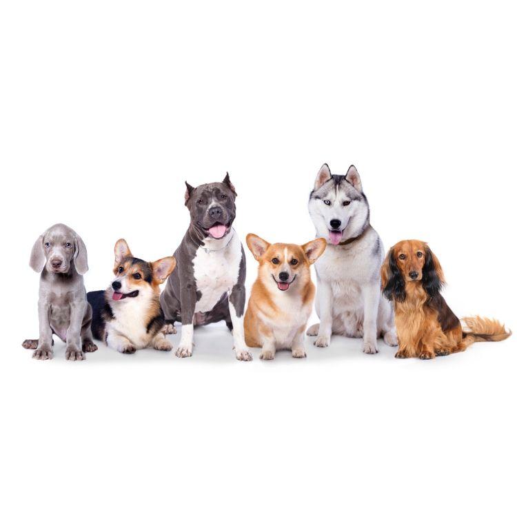 Pflege des Hundes
