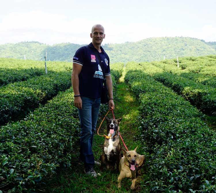 dog training chiang mai
