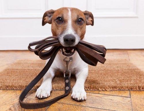 Wie finden Sie die beste Hundeschule?