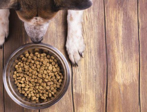 Wie oft und wieviel den Hund füttern?