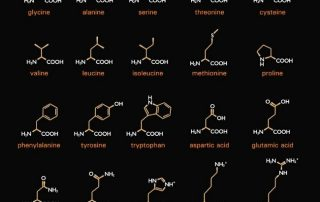 Aminosäuren