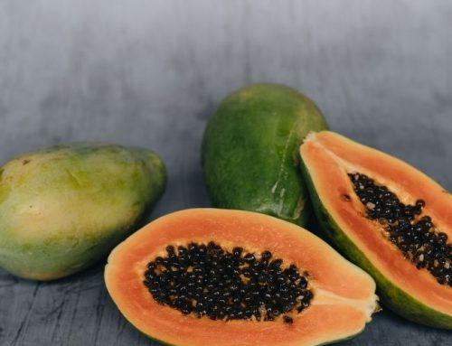 Papaya, – Papain, – Extrakt & Samen